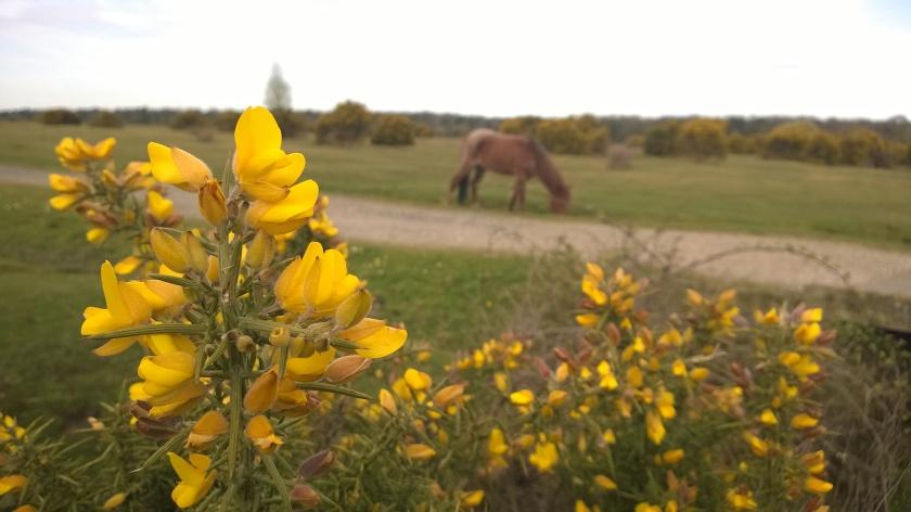 taustal on hobune, sest New Forestis on iga asja taustal hobune